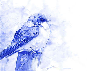 Tree Swallow (Smalt)