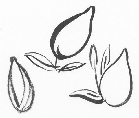 Lemon Sketches