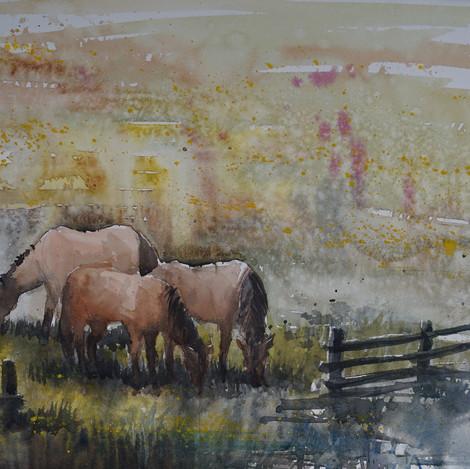 Happy Horses @ Praire Canyon, 11x14