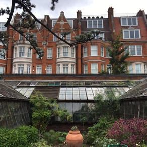 Roots & Radicles 1: pumice prop, plant messiahs, surviving the blitz, and deck chairs at Kew...