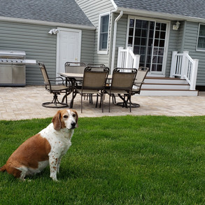 Jax in the backyard