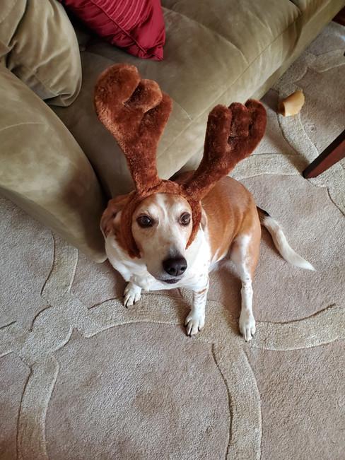 Reindeer Jax.