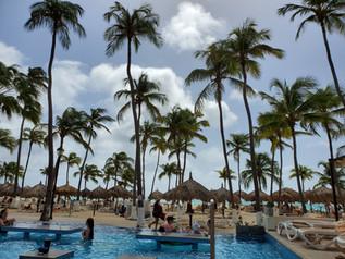 Beautiful Aruba Palm Trees