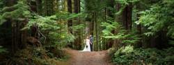 Rainforest Wedding Washington Photos