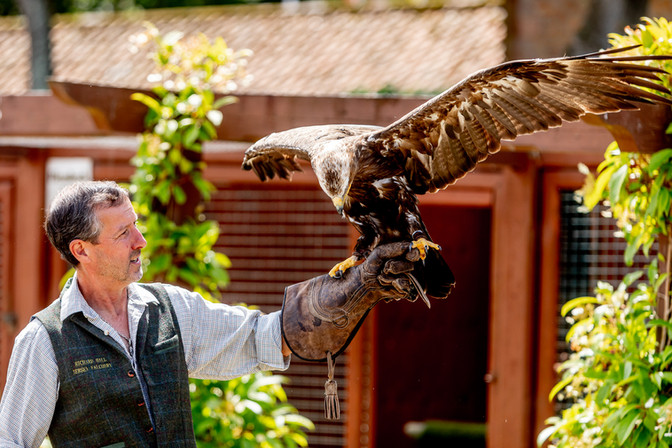 Falconry st John's Manor