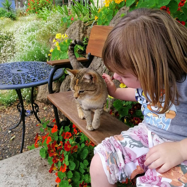 Little girl patting cat at Echo Farm Mou