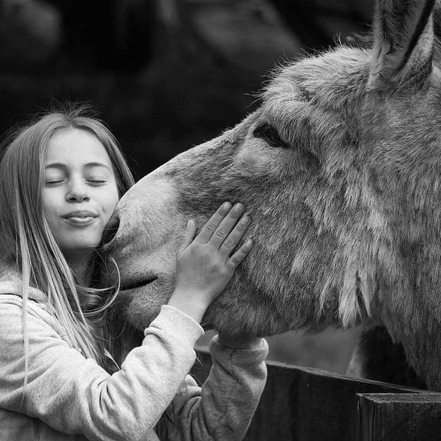 Girl kissing donkey at Echo Farm Mount G