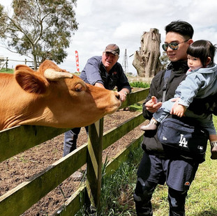 Man and child hand feeding cow with farm