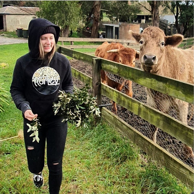 cows with teenage girl laughing at Echo