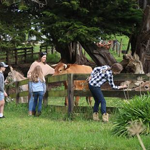 Children & lady feeding donkey and cows