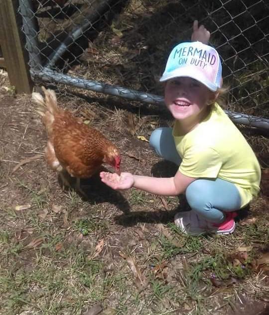 child feeding chicken at Echo Farm Mount