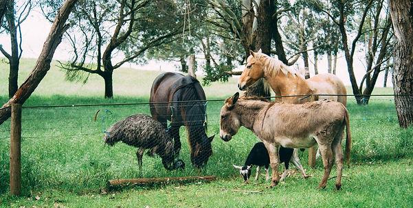 Echo Farm animals