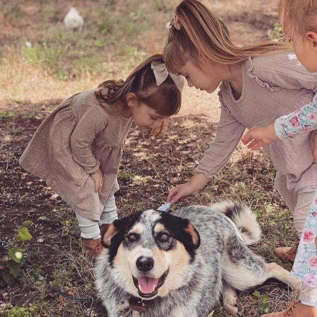 Girls patting Carl the dog at Echo Farm