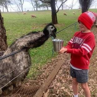 Boy hand feeding emu at Echo Farm Mount