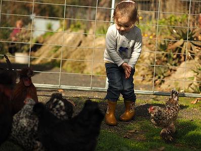 Girl feeding chickens at Echo Farm Mount Gambier