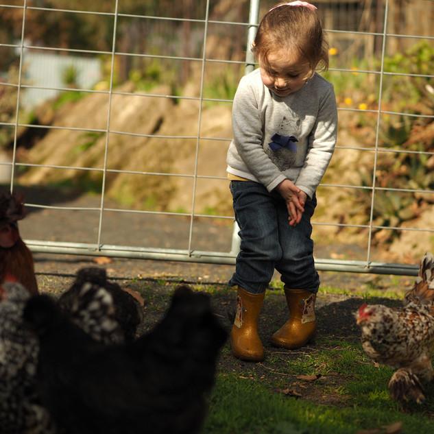 Girl feeding chickens at Echo Farm Mount