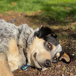 Carl Echo Farm Mount Gambier's dog.jpg