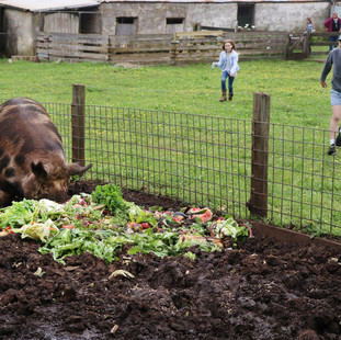 pig in food with kids running towards at