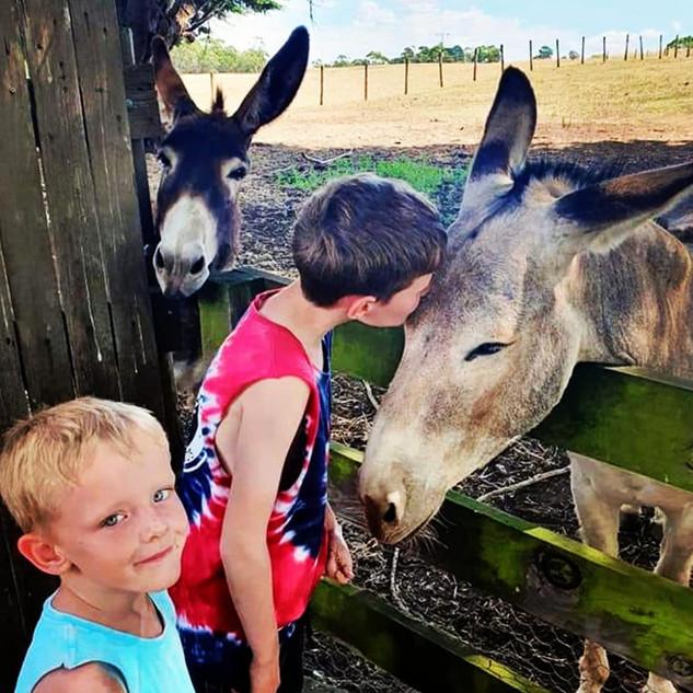 Boy kissing donkey with other donkey pee