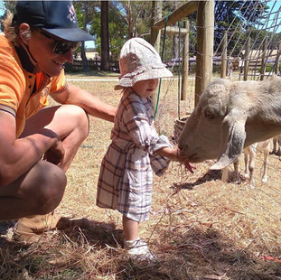 Little girl and her dad feeding goat at