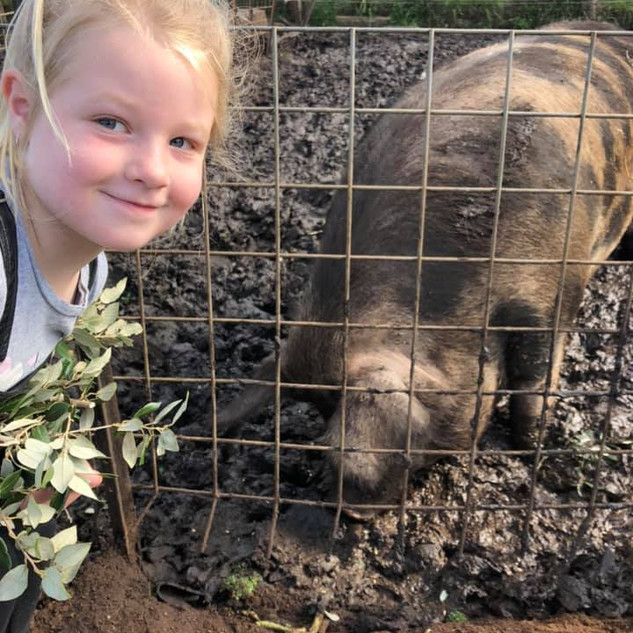 Girl with pig at Echo Farm Mount Gambier