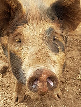 Peppa Pig close up.jpg