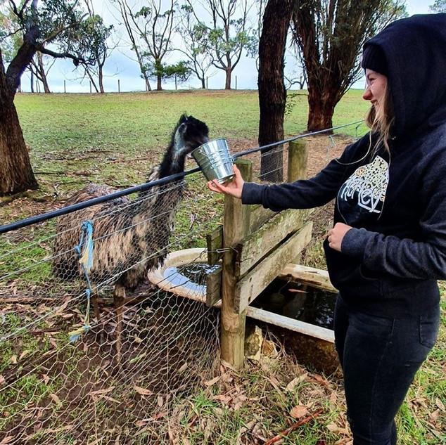 teenage girl feeding emu at Echo Farm Mo