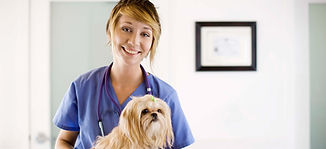 Патент для ИП на ветеринарные услуги