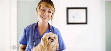 Оформим и зарегистрируем патент на ветеринарные услуги