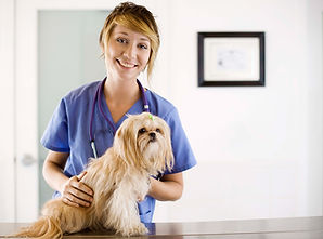 vet and small dog