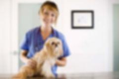 Verzekering huisdier Dierenkliniek Goes Dierenarts Wemeldinge