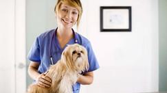 Como detectar doenças o mais cedo possível aumentando a sobrevida do meu pet?