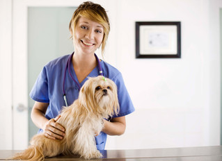Andersen Sleater Sianni Represents Pet Owners who Were Harmed by Flea and Tick Medicine that Didn&#3