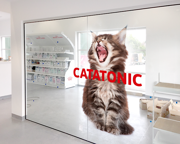 window graphic.png