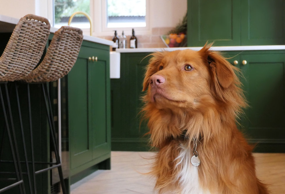 A cute dog in a handmade green kitchen