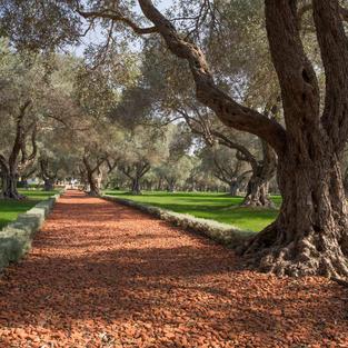Photos of the Bahá'í Gardens in 'Akko