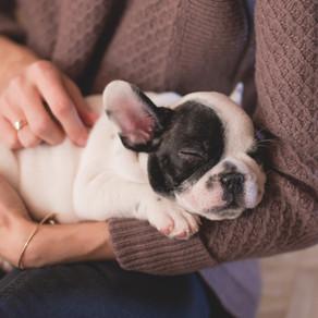 Cuidados com cães braquicefálicos