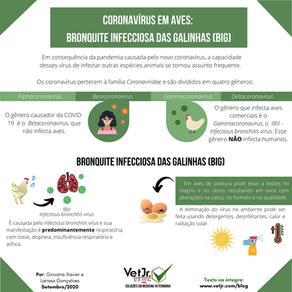 Coronavírus em aves: Bronquite infecciosa das galinhas (BIG)