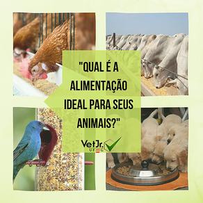 Qual é a alimentação ideal para seus animais?