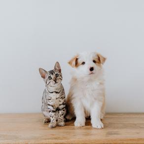 Manejo de cães e gatos Neonatos