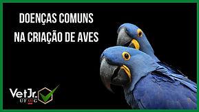 Doenças_comuns_na_criação_de_aves.jpg