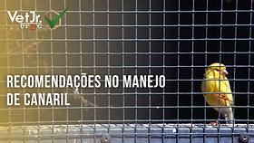 Capa Recomendações no manejo de canaril.png