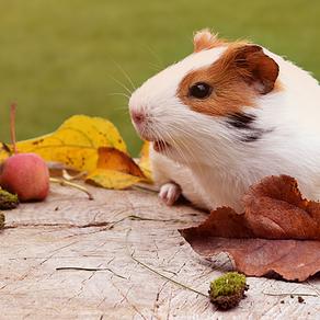 Criação de animal silvestre e exótico: o que considerar na hora da compra?