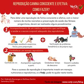 Reprodução Canina consciente e efetiva: como fazer?