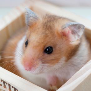 Aspectos reprodutivos dos roedores