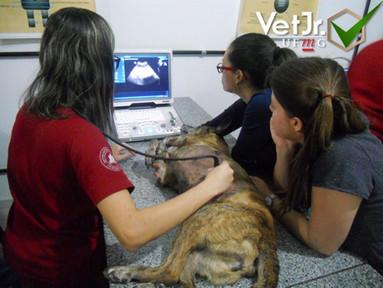 Curso Ultrassonografia
