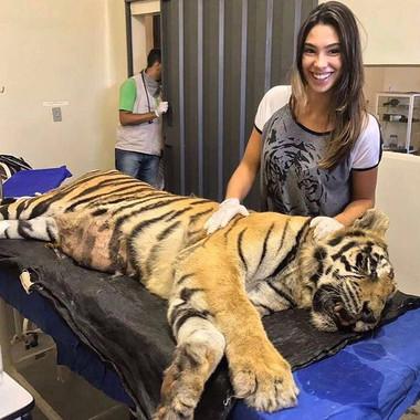 tigre dormindo.jpg