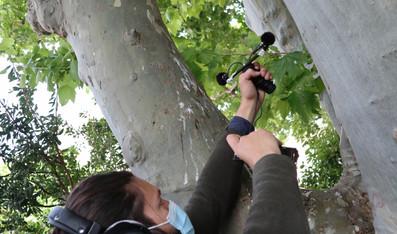 Atelier Field Recording - Noves
