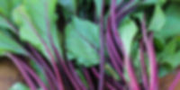 IMG_2201_edited.jpg