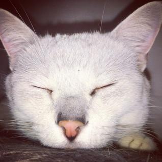 cat sitter in muswellhill